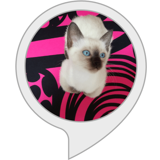 Cat Quiz Alexa skill by Theresia Schauerhofer